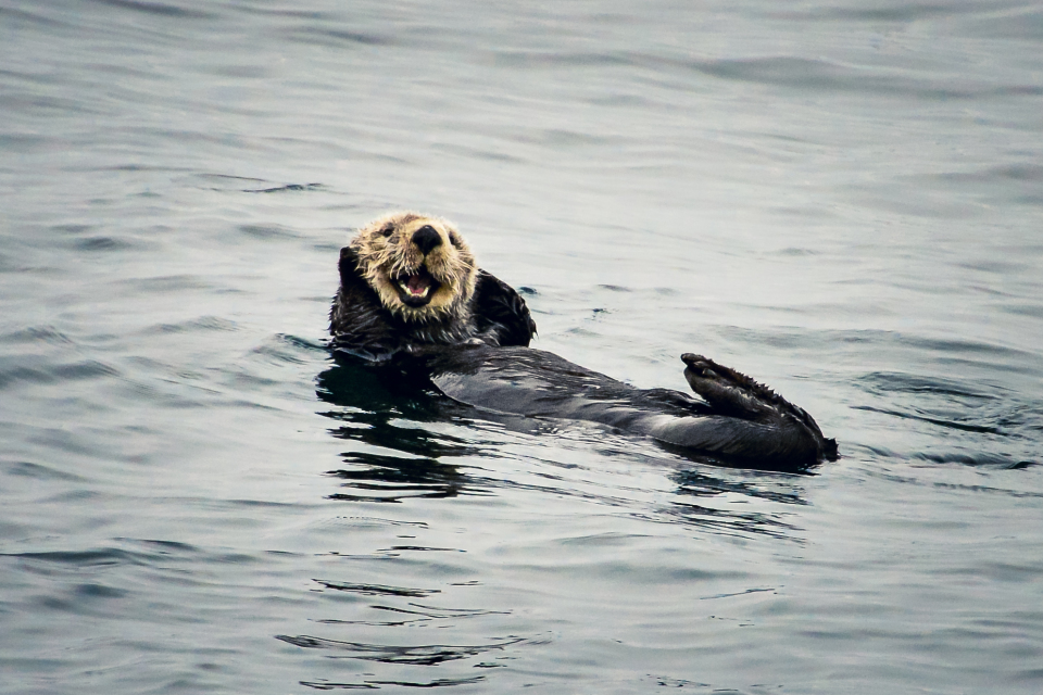 http://humanstories.photography/wp-content/uploads/2014/10/Happy-Otter-001-960x640_c.jpg