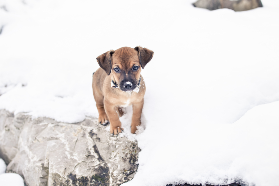 http://humanstories.photography/wp-content/uploads/2014/12/Rupert-in-the-snow-001-960x640_c.jpg