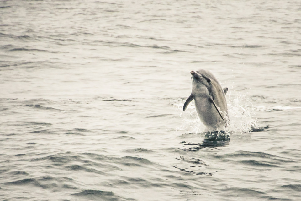 http://humanstories.photography/wp-content/uploads/2015/02/Dolphin-001-960x640_c.jpg